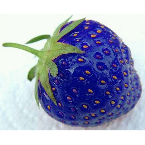 100PCS Strawberry Seeds Organic Fruit Plant Vegetables Seed For Garden
